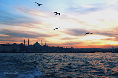 Birds are flying over Istanbul (anne.vall) Tags: blue sunset sea birds turkey flying view horizon over istanbul mosque estambul turqua