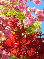 Light (brooksbos) Tags: city trees light urban color colour leaves boston geotagged ma photography photo spring afternoon massachusetts blossoms newengland olympus bostonma southend brooks springtime bostonist floweringplum lurvely thatsboston xz1 brooksbos