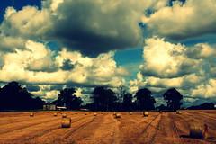 #flickrchange (asfal.TO) Tags: landscape cielo inverted scania swden svezia skane atestaingiù flickrchange