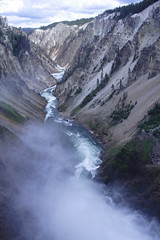 IMG_1345 (murraymike89410) Tags: yellowstone wyoming np