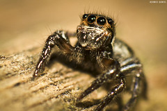 Spider (HermesDaniel) Tags: macro lens spider florianópolis reverse campeche lenteinvertida hermesdaniel canon1100d