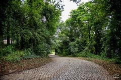 Diest 300716 19 (David Vanthienen) Tags: walk natu hike walking city stad diest hiking wandelen wandeling dieststadcitywandelingwandelenhikinghikewalkingwalknatuurnaturecitadelhalvemaandemerecocenterwarandebegijnhofbeguinage