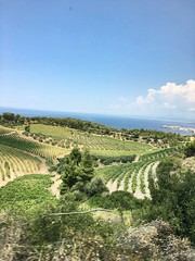 The #vineyards of Domaine @portocarras, a combination of various vineyards extending on the #slopes of #resort Meliton!  #portocarras #domaine #wine #luxury #resort #bio #Sithonia #Halkidiki (Porto Carras Grand Resort) Tags: vineyards slopes resort portocarras domaine wine luxury bio sithonia halkidiki