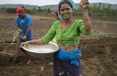 Farmer Kausila Chanara direct dry seeding rice in Ramghat, Surkhet. (CIMMYT) Tags: nepal csisa cimmyt maize agriculture smallholder farmer mechanization asia