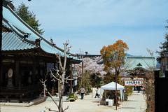 (tiagoalexandresilva) Tags: asia honshu japan sonya6000 hanami sakura cherryblossom hiroshima miyajima itsukushima