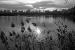 Untitled (shudaizi) Tags: developer usa xtol leicasummicron35mmf20asph lens northamerica newyork ap400 2011 35mm film aristapremium400 nyc places blackandwhite m6 centralpark newyorkcity bwfp