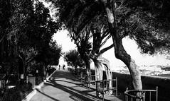 Barrakka gardens (lorenzoviolone) Tags: agfascala200 bw blackwhite blackandwhite finepix fujix100s fujifilm fujifilmx100s garden monochrome vsco vscofilm x100s benches mirrorless park strangers streetphoto streetphotobw streetphotography trees trip:malta=feb2016 view wall valletta malta
