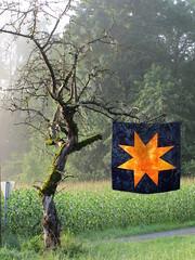 Ein Stern fr Elke (Lizinnie) Tags: wonkystar liberated stern 12bowleggedcurvybees