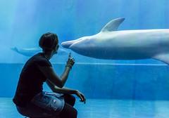 Fra i delfini (Luciano Fochi) Tags: acquariodigenova delfini acquario genova liguria