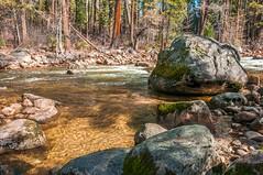 _DSC8656 (noshoot.jimd) Tags: environment flora places scene seasons water moss parks rocks streams trees wilderness winter yosemitenp california usa