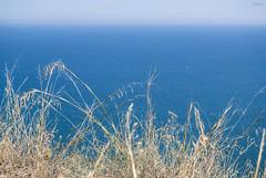 M E D I T E R R A N E O (Emykla) Tags: mediterraneo mediterranean italia italy puglia apulia nikon d3100 blue blu giallo yellow mare sea adriatico mattinata wheat grano sky cielo sud south meridione