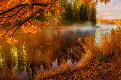 Morning Glow (BirgittaSjostedt) Tags: autumn landscape water scene view tree leaf grass haze sun river reflection sunrise birgittasjostedt outdoor texture serne serene sunset ie magicunicornverybest