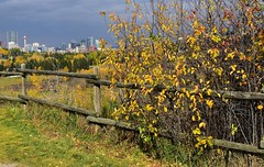Riverpark (Jane Olsen ( Chardonnay)) Tags: outdoor trees leaves colors grass sky park buildings offices cityscape fence wire