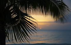 Jamaican sunset (Sharkshock) Tags: jamaica negrill beach tree palm clouds sun tropical tropics soft focus carribean