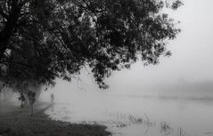 The mysterious man (jocsdellum) Tags: man hombre home boira niebla mist fog misterioso mysterious aigua water agua earlymorning mati maana soft focus blackandwhite monocrom tree arbre arbol