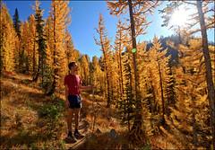 Larch 4 (@GilAegerter / klahini.com) Tags: larch entiat nikon nikkor mountains hiking wilderness autumn fall