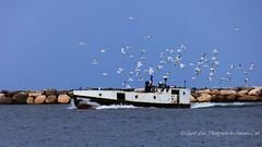 Good Catch- (1 of 1) (amndcook) Tags: keweenaw michigan water boat fishing lakesuperior rocks seagull upperpeninsula