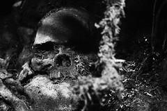 There Was a Skull (MTSOfan) Tags: skull bw greyscale creepy