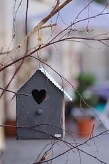 In a Shape of a Heart (haberlea) Tags: france azaylerideau shop display branch birdhouse heart metal passesimple decoration