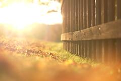 Sundown down low (Jani M) Tags: sun sunset sundown fence autumn light flare bright fall lowpov