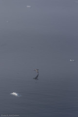 Foggy gull and ice (Elvar H) Tags: arcticocean helmerhansen siarctic ice