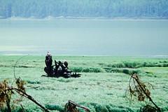 Bald Eagles again (bart_) Tags: bald eagles cingolx canon ef fuji pro 160s