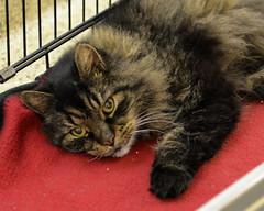Hugo-DSC_0002 (Ali Crehan) Tags: shelter cat september 2016