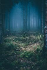 The Skull Forest (sfp - sebastian fischer photography) Tags: landschaft natur oktober2016 schwarzwald landscape nature blackforest nebel mist skull totenschdel mystisch mystical fairytale mrchen sonnartfe1855 e emount sony zeiss carlszeiss carlzeiss fe femount