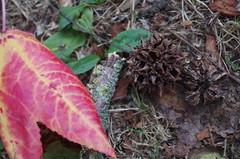 Couleur d'automne (mailyse.bellanger) Tags: feuille rouge verte orange jaune fruit