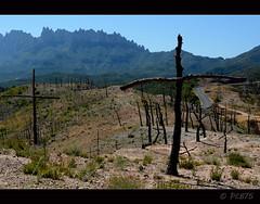 Rquiem pel bosc cremat (PCB75) Tags: catalunya catalogne catalonia katalonien catalogna ainhoa 2016