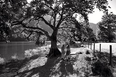 give it up for love (plot19) Tags: olivia sandy family love landscape light lakedistrict lake land lakes buttermere walk trees tree national nikon north northwest northern nature plot19 photography english england blackandwhite blackwhite britain british black trust shadow
