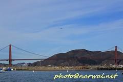 Fleet Week SF 2016 (Narwal) Tags: golden gate bridge  sfo sanfrancisco california ca us usa    marina district fleet week sf 2016  uss san diego lpd 22 parade ships