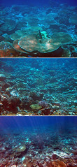 Corals in Maldives (Nikita Hengbok) Tags: naturephotography fauna animals nature wildlifephotos wildlifepics wildlifephotography fishes marinecreatures marinecreaturesofmaldives macrophotography marineanimals marineanimalsofmaldives vacationinmaldives maldives sunislandresort tropicalparadise nalaguraidhooisland snorkelling snorkellinginmaldives corals coralsinmaldives