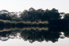20160827_GreenZambeziReflections_MCM-7 (mcmessner) Tags: africa bjadventures livingston reflection river rorschak southafrica2016 sunrise sunriseboatride tongabezilodge zambeziriver zambia livinstone