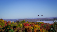 Look out from the Hawk Watch with geese (joshsikora) Tags: thehawkwatch catskills catskillmountians hawkwatch country rollinghills jsphotography changingcolors fog sunrise valley the607 otsegocounty otsegocountyny otsegocountynewyork autumn fall upstatenewyork upstateny upstate geese