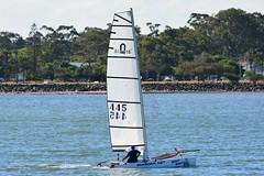 DSC_0414 (LoxPix2) Tags: loxpix queensland australia sailing catamaran trimaran nacra hobie arrow moth 505 maricat humpybongyachtclub humpybash aclass f18 mosquito laser bird spinnaker woodypoint