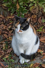 Neighborhood Cat (Bob Gilley) Tags: domestic cat canon ef70300mm f4556 do is usm