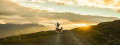 Sundowner (christinanigsch) Tags: landscape nature sun sunset sunlight light shadows mountains grass dog collie man photograph nikon nikkor sky clouds white mist misty fog