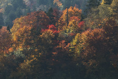 Vibrance and Color (jasohill) Tags: autumn october landscape tohoku vibrant city 2016 iwate trees adventure travel photography life colors hachimantai color japan nature eos 80d