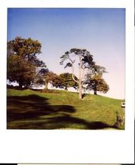trees (Mark Entwisle) Tags: polaroid 680 slr sun 600 ashton court