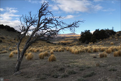 Central Otago Barron Treeborder (Dan @ DG Images) Tags: new sky brown mountains tree grass scenery central zealand otago grasses desolate tussock hdr barron nlue bendigo dgimages