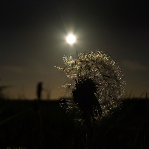 Den Helder; Dandelion at the end