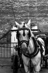 El transporte (Jifasa) Tags: door city blue red sky blackandwhite espaa horse sun white black green castle blancoynegro sol beautiful animal animals shop azul clouds work dark landscape caballo grey photo nice sevilla rojo puerta doors torre sunny ciudad sombra paisaje pic andalucia cielo nubes bonita preciosa shops animales colourful azulejo len sombras castillo cermica fotography puertas soleado darks scapeland