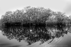 Everglades shadows in B&W (hgrapek) Tags: trees bw white black fauna nikon shadows angle florida wide tokina swamp everglades airboat 1017 evergladesholidaypark