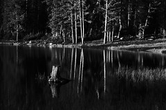 Pond Stump (JasonCameron) Tags: white lake black reflection water monochrome mono utah sticks pond woods pines stump