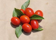 garden snack (Moon Rhythm) Tags: basil tomato garden igrow mybackyard