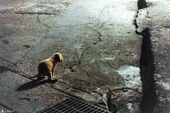 I do more than pee (rabbit7419999) Tags: taiwan snapshot  nikon nikkor2470f28 d4s dog puppy stray night pooh
