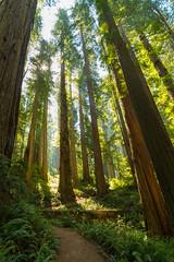 017_7554 (pdxsean) Tags: california crescentcity delnortecounty redwoods smithriver hike