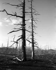 Dead Forest (ignatenkom) Tags: kamchatka bronica 6x7 fuji across russia bw gs1