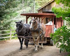 Horse Power (lclower19) Tags: osv sturbridge massachusetts village horse transport two pair